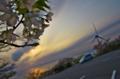 桜と夕日と発電風車と