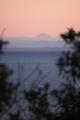 2020年元旦 伊勢音無山よりの富士山遠望