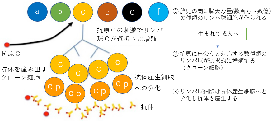 f:id:TatsuyaYokohori:20210108210200p:plain