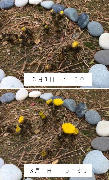 f:id:TatsuyaYokohori:20210301134339p:plain