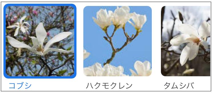 f:id:TatsuyaYokohori:20210330104602p:plain