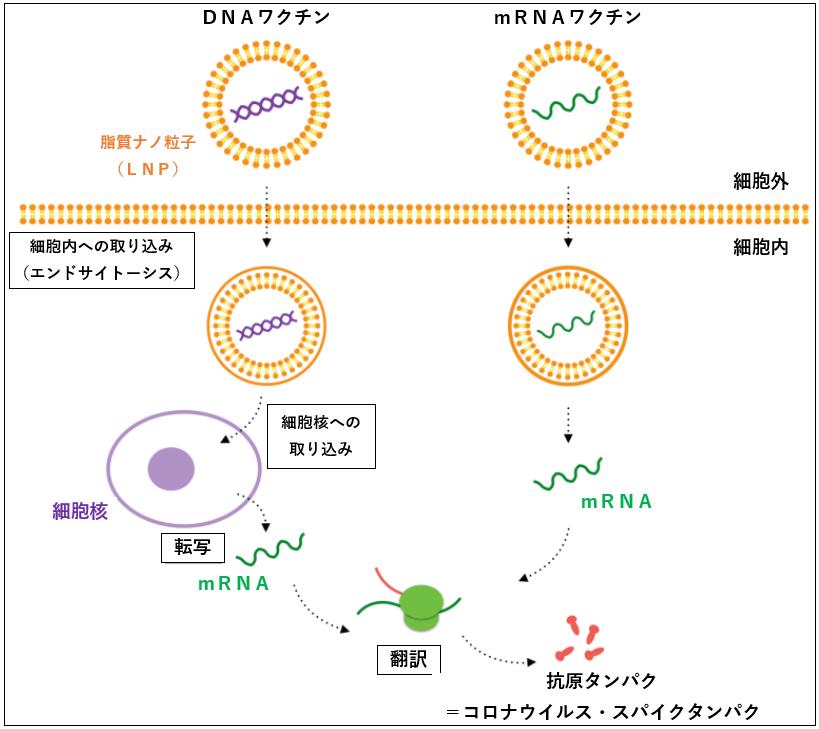 f:id:TatsuyaYokohori:20210701110114p:plain
