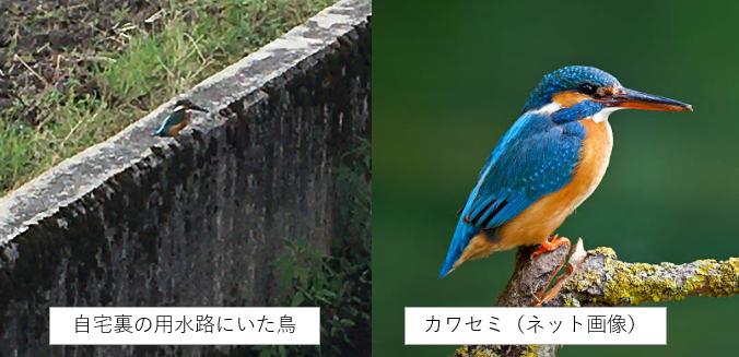 f:id:TatsuyaYokohori:20211019134814p:plain
