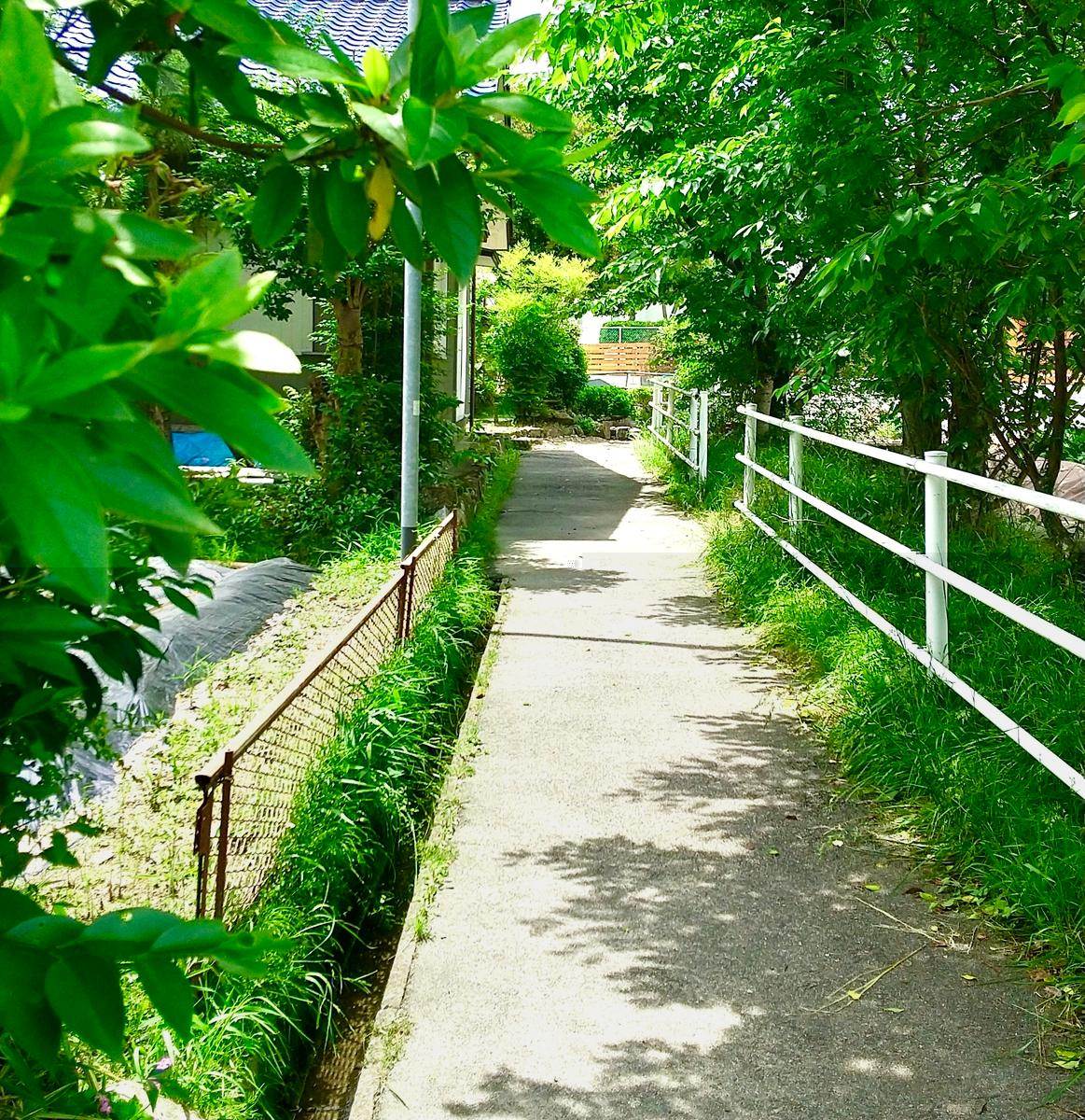 伊保小学校東門の前の田んぼ道