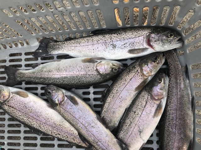 北方管理釣り場 釣果