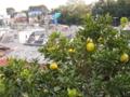 [果物]PB095313.JPG