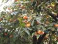 [果物]PB095314.JPG