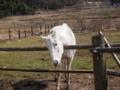 [馬][動物]P3160022.JPG