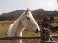 [馬][動物]P3160023.JPG