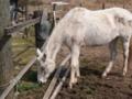 [馬][動物]P3160025.JPG