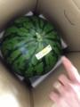 [果物][植物][当選品][スイカ]IMG_0026.JPG