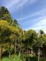 [植物][竹]IMG_0046.JPG
