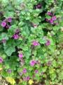 [花][植物]IMG_0054.JPG