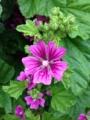 [花][植物]IMG_0055.JPG