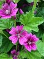 [花][植物]IMG_0056.JPG