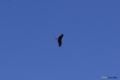 [北海道][鳥]蒼に独り