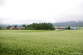 [北海道]蕎麦の平原