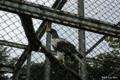 [北海道][鳥]保護中のオオワシ