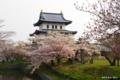 [北海道][花][桜][松前]桜彩る松前城 II
