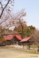 [北海道][松前][花]松前神社と冬桜