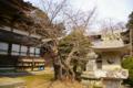 [北海道][松前][花]龍雲院の桜