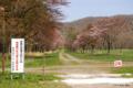 [北海道][二十間道路][花][桜]二十間道路桜並木・花のトンネル I