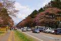 [北海道][二十間道路][花][桜]二十間道路桜並木 IX