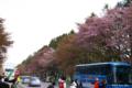 [北海道][二十間道路][花][桜]二十間道路桜並木 X