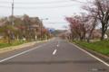 [北海道][登別][花][桜]登別桜並木「花のトンネル」 VI