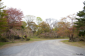 [北海道][有珠善光寺自然公園][花][桜]有珠善光寺自然公園・駐車場