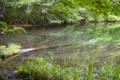 [東北][八甲田山]蔦の七沼 月沼 II 湖底の倒木