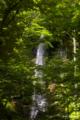[東北][奥入瀬]白絹の滝 I