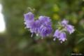 [北海道][函館][花]函館山の花々 I