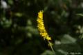[北海道][函館][花]函館山の花々 IV
