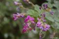 [北海道][函館][花]函館山の花々 VII