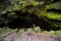 [山梨県][青木ヶ原樹海]竜宮洞穴 II