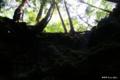 [山梨県][青木ヶ原樹海]竜宮洞穴 IV 洞穴入口から樹海を仰ぐ