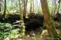 [山梨県][青木ヶ原樹海]竜宮洞穴 V 樹海に潜む洞穴