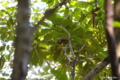 [山梨県][青木ヶ原樹海][鳥]ヤマガラ @精進湖 パノラマ台中腹