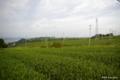 [静岡県][牧之原]牧之原台地の茶畑 I