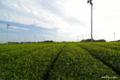 [静岡県]牧之原台地の茶畑 IV