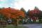 香雪園の紅葉 II