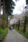 松前城 染井吉野の並木