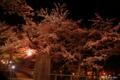[北海道][函館][桜]