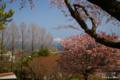 [北海道][花][桜][羊蹄山]桜から垣間見る羊蹄山 @北海道森町 オニウシ公園