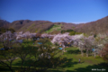 [北海道][花][桜]熊石休養村の桜 I