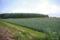 黒松内町のジャガイモ畑