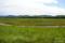 キムアネップ岬 夏のサンゴ草群生地
