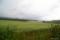 上富良野・美瑛山中の蕎麦畑