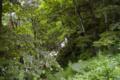 [北海道][大雪山]天狗の滝 II